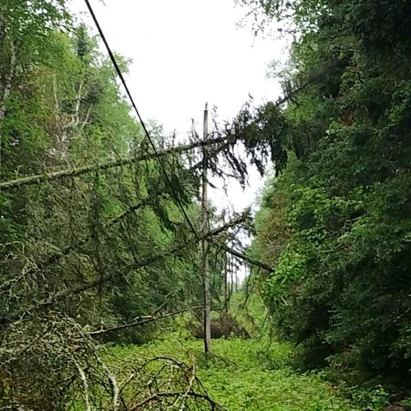 tree damage to line