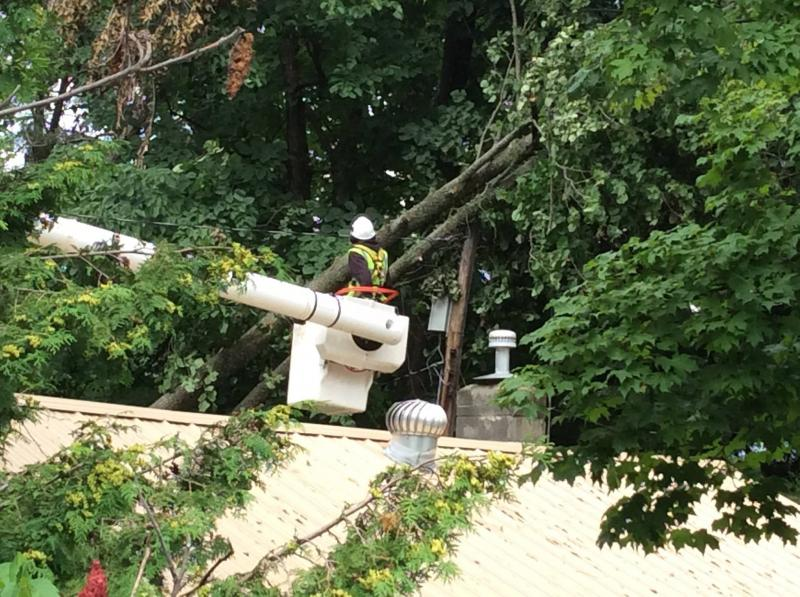 lineman and tree damage
